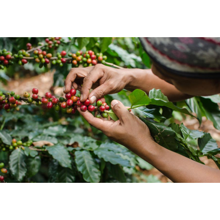 Vitalmushroom Coffee Reishi Organic (250g)