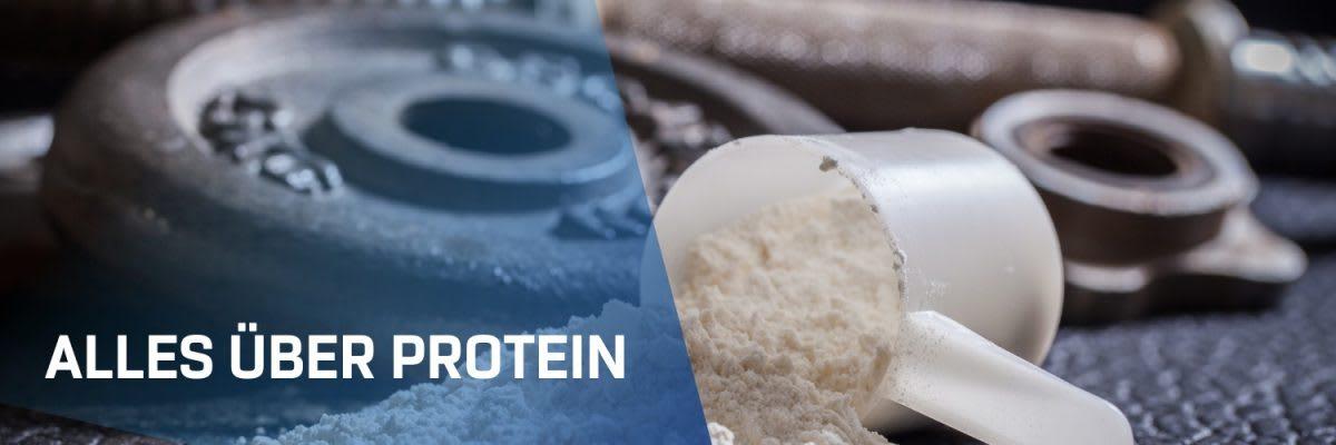 Proteïnen