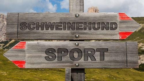 Vom Sportmuffel zur Fitness-QUEEN - wie du den inneren Schweinehund überwindest